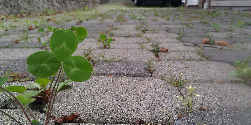 How To Stop Weeds Growing Through Gravel Home Logic Driveways